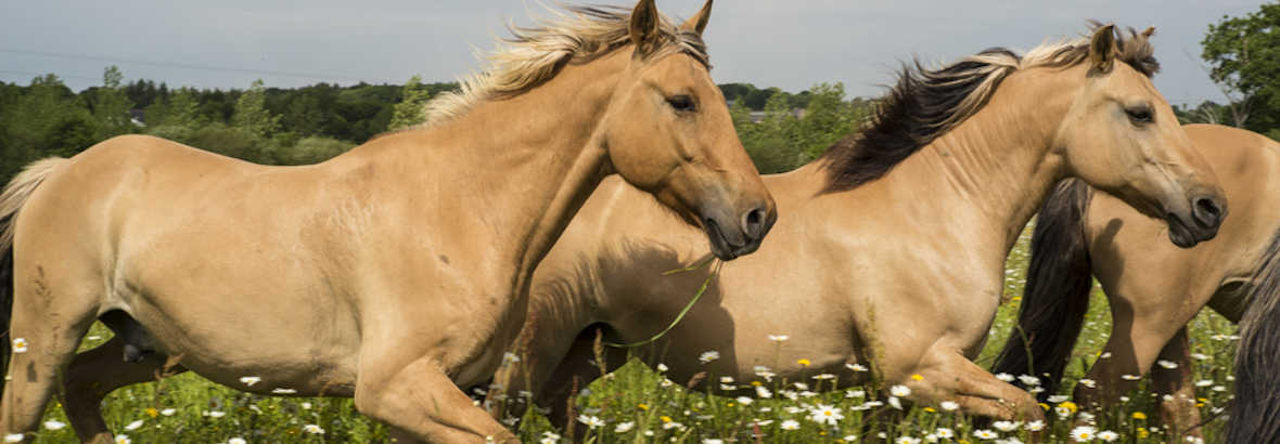 Accompagnement assisté par les chevaux et la Nature