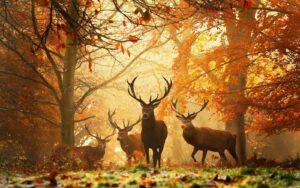 Samaïn, Samhain, roue des saisons