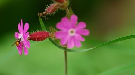 nectar outils - La Danse Des Eléments